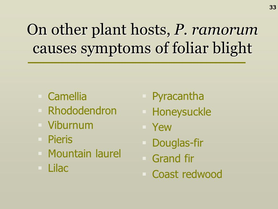 On other plant hosts, P. ramorum causes symptoms of foliar blight