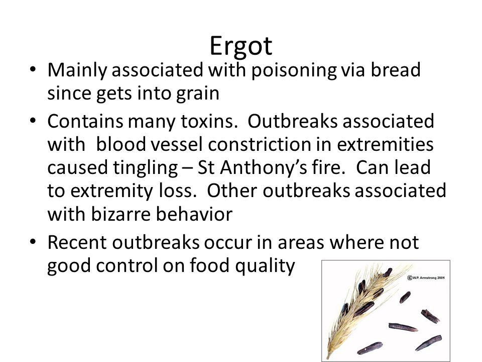 Ergot Mainly associated with poisoning via bread since gets into grain