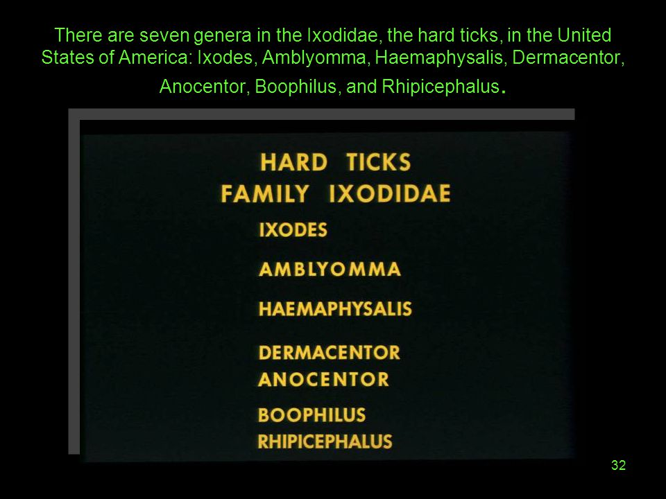There are seven genera in the Ixodidae, the hard ticks, in the United States of America: Ixodes, Amblyomma, Haemaphysalis, Dermacentor, Anocentor, Boophilus, and Rhipicephalus.