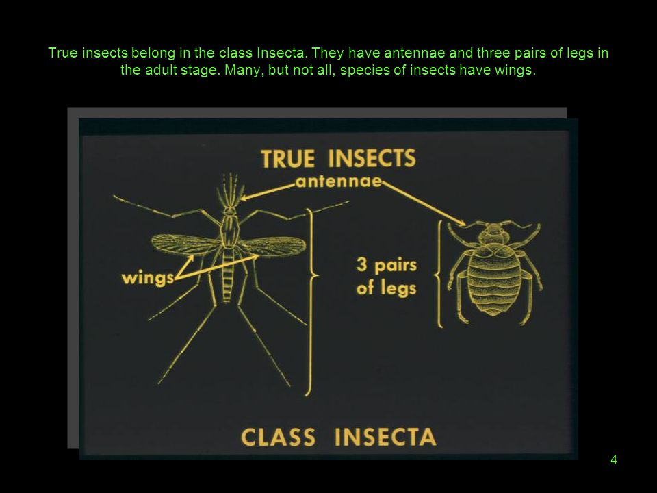 True insects belong in the class Insecta