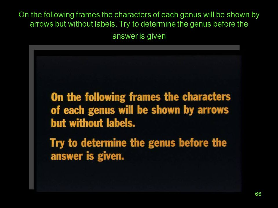 On the following frames the characters of each genus will be shown by arrows but without labels.