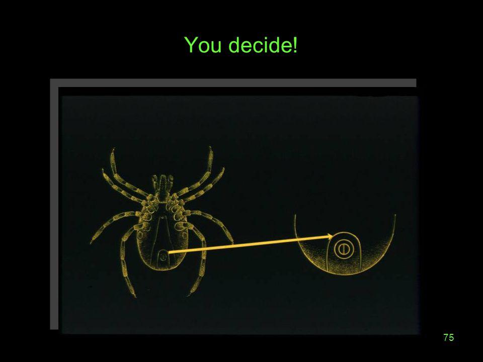 You decide!