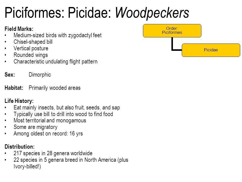Piciformes: Picidae: Woodpeckers