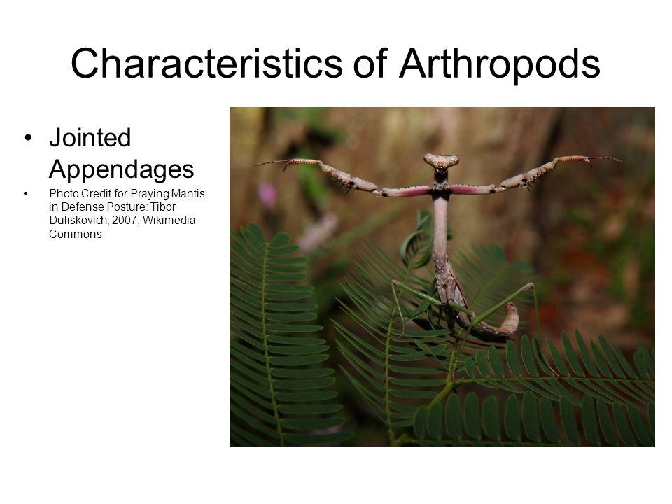 Characteristics of Arthropods