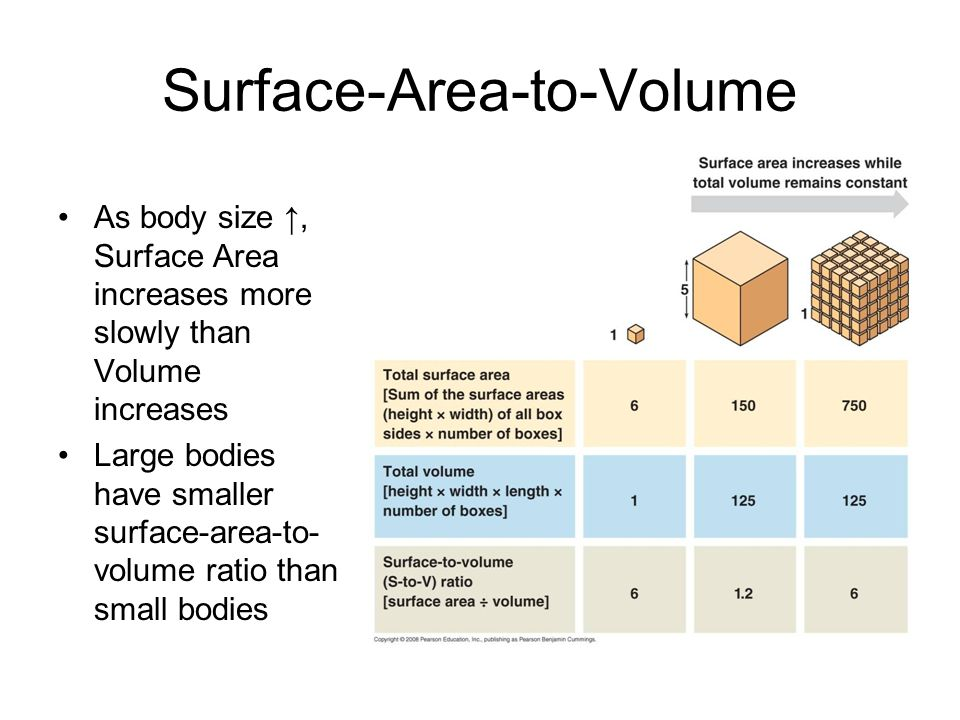 Surface-Area-to-Volume
