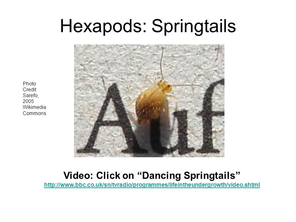 Hexapods: Springtails