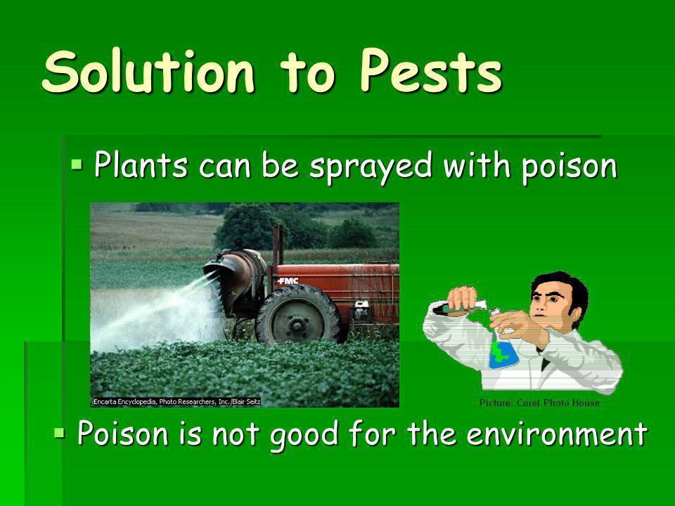 Solution to Pests Plants can be sprayed with poison