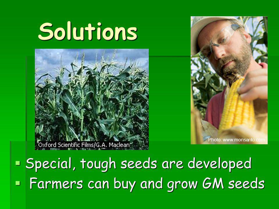 Solutions Special, tough seeds are developed
