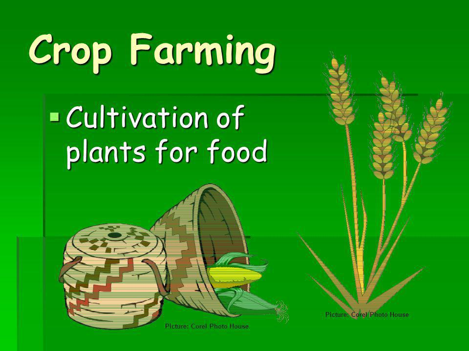 Crop Farming Cultivation of plants for food Picture: Corel Photo House