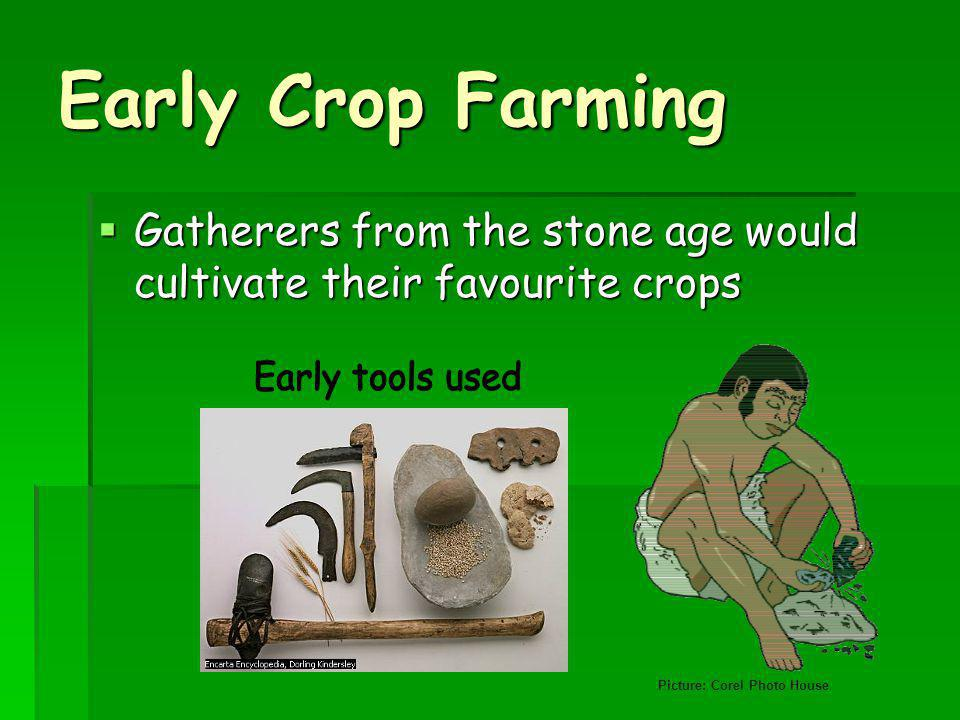 Early Crop Farming Early tools used