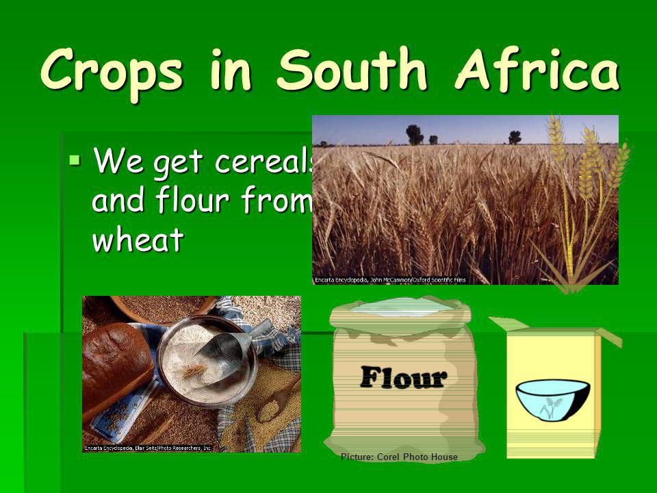 Crops in South Africa We get cereals and flour from wheat