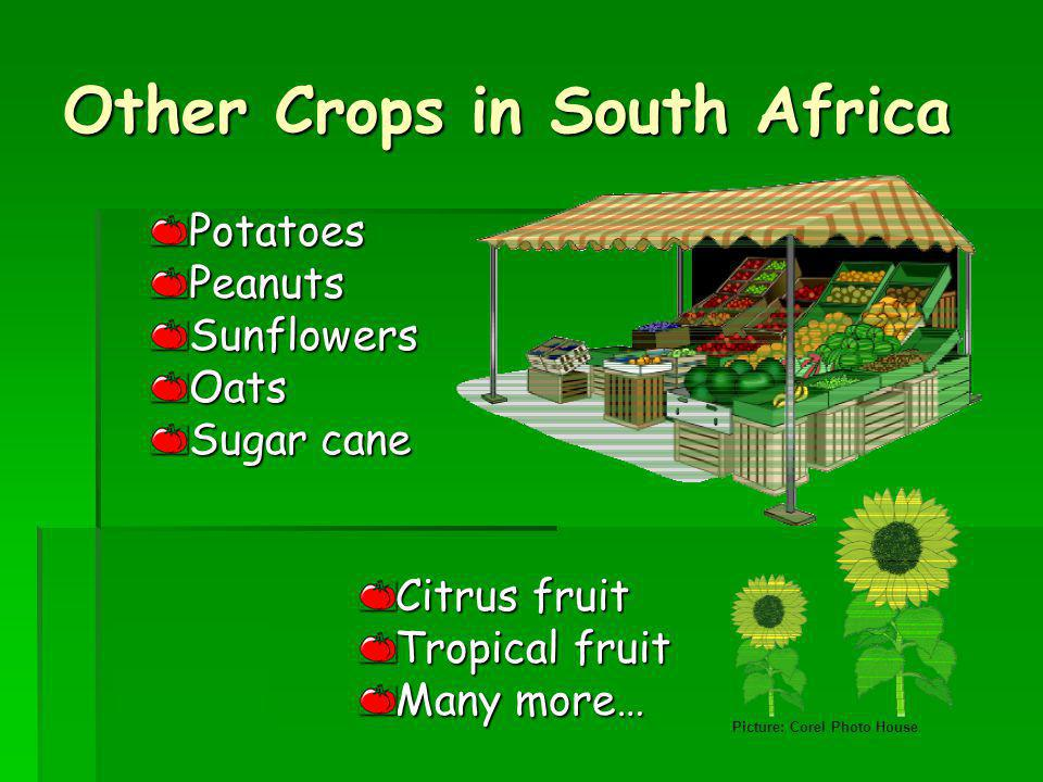 Other Crops in South Africa