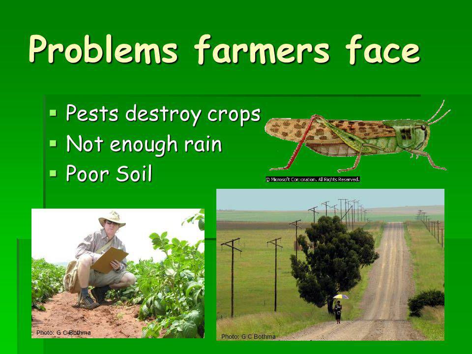 Problems farmers face Pests destroy crops Not enough rain Poor Soil