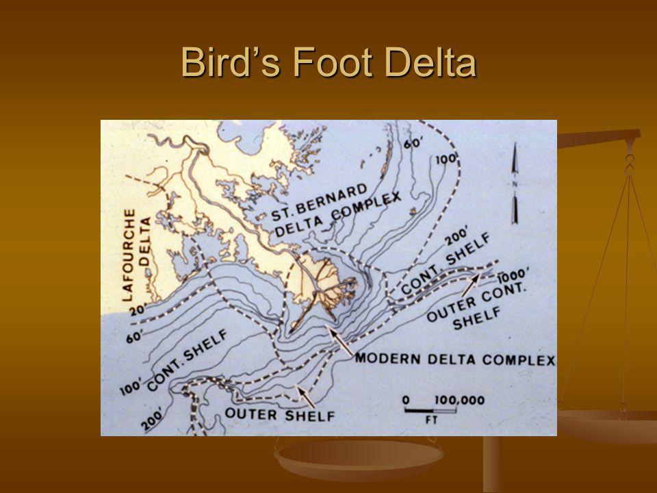 Bird's Foot Delta