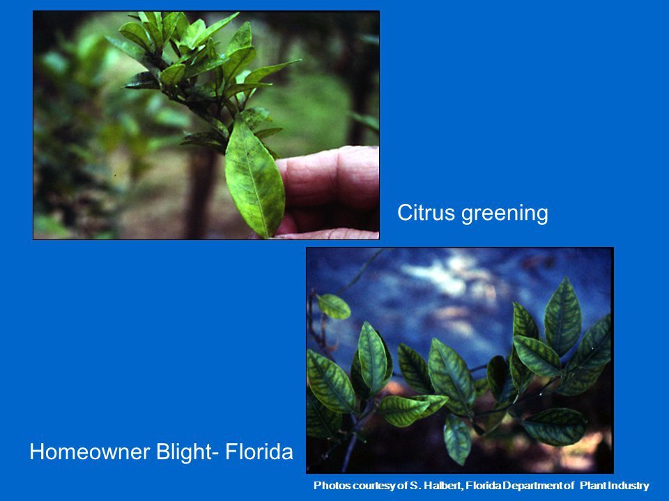 Homeowner Blight- Florida