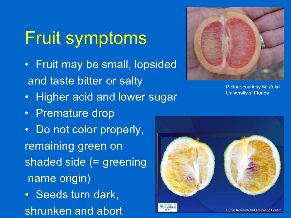 Fruit symptoms Fruit may be small, lopsided and taste bitter or salty