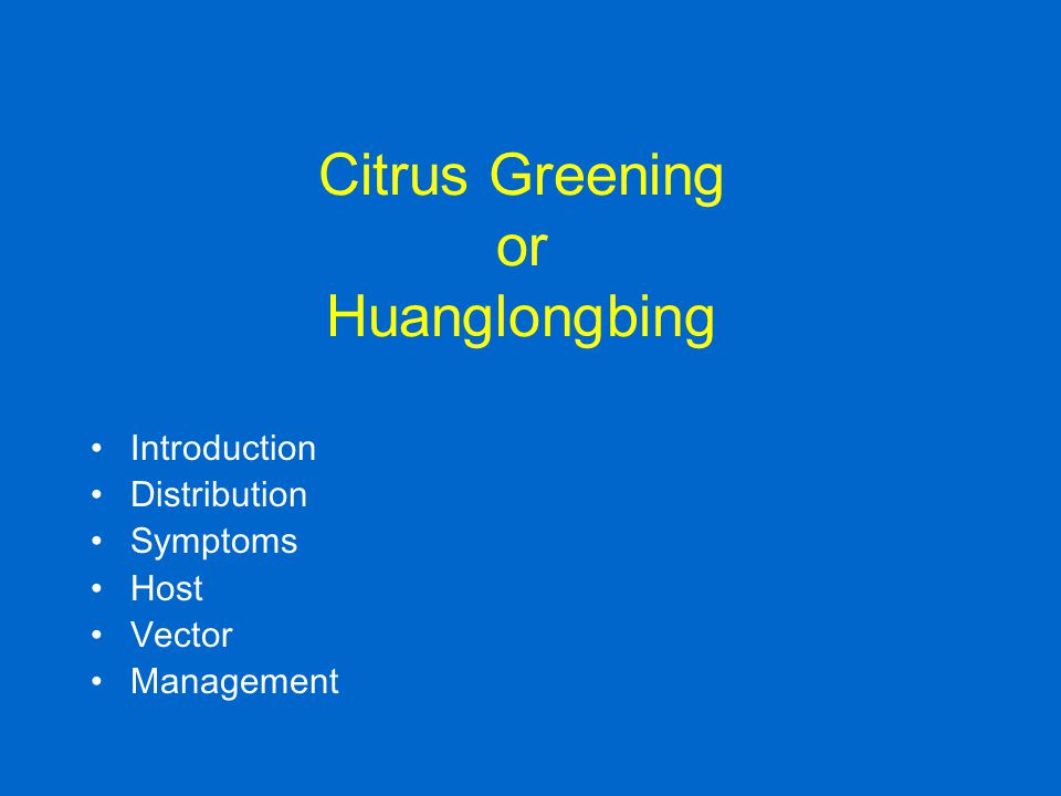 Citrus Greening or Huanglongbing