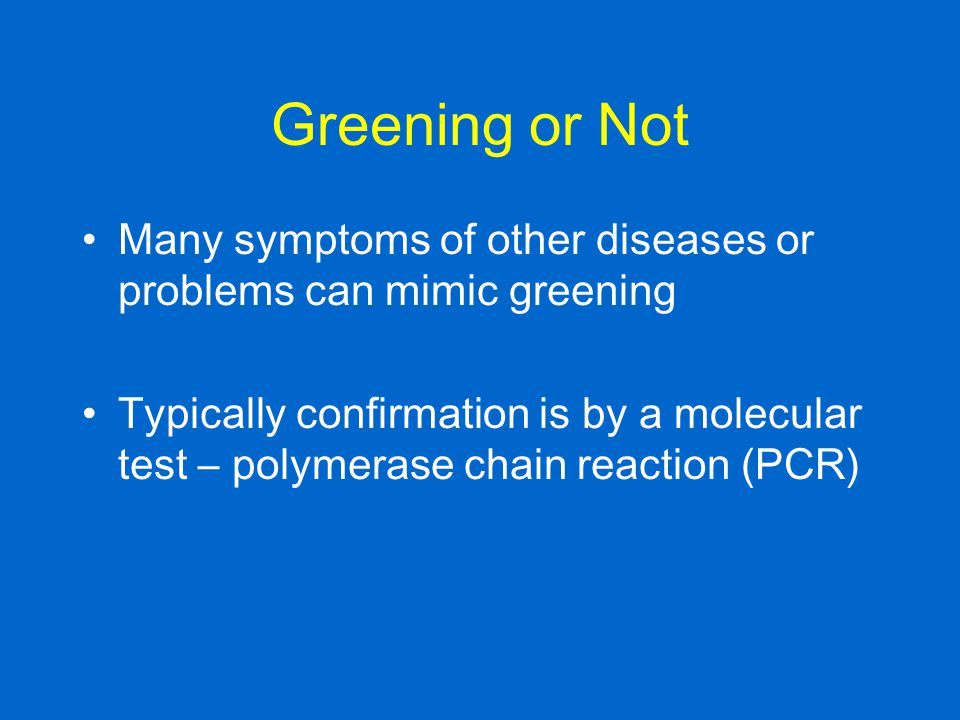 Greening or Not Many symptoms of other diseases or problems can mimic greening.