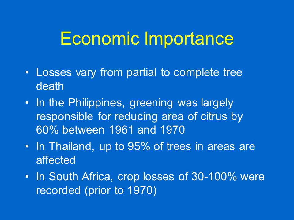 Economic Importance Losses vary from partial to complete tree death