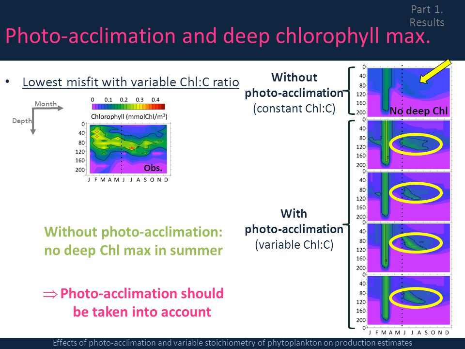 Photo-acclimation and deep chlorophyll max.