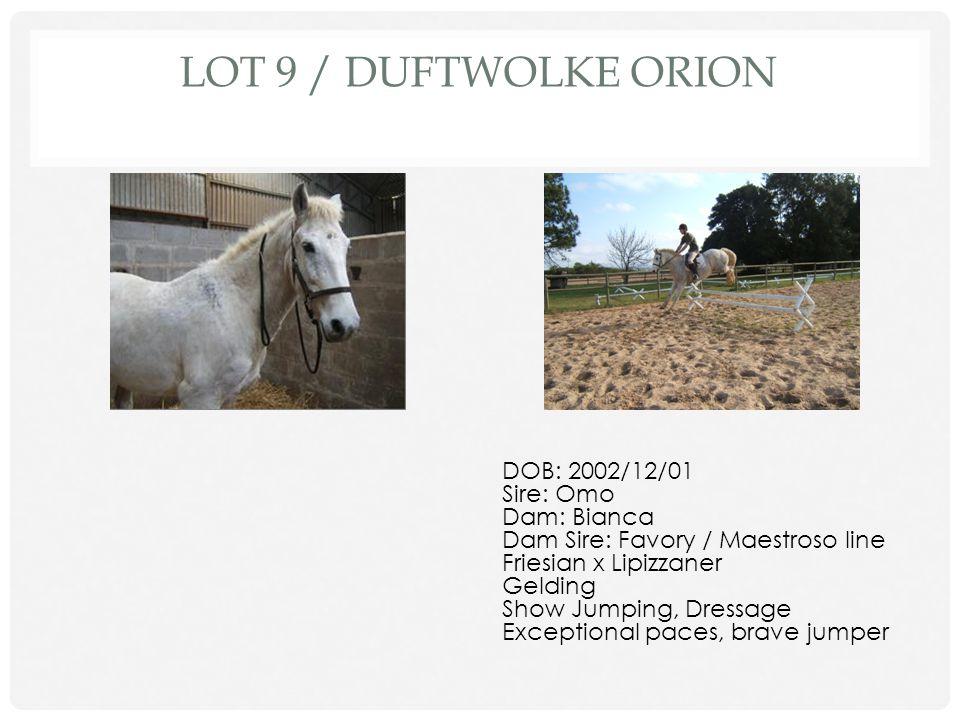 Lot 9 / Duftwolke Orion DOB: 2002/12/01 Sire: Omo Dam: Bianca