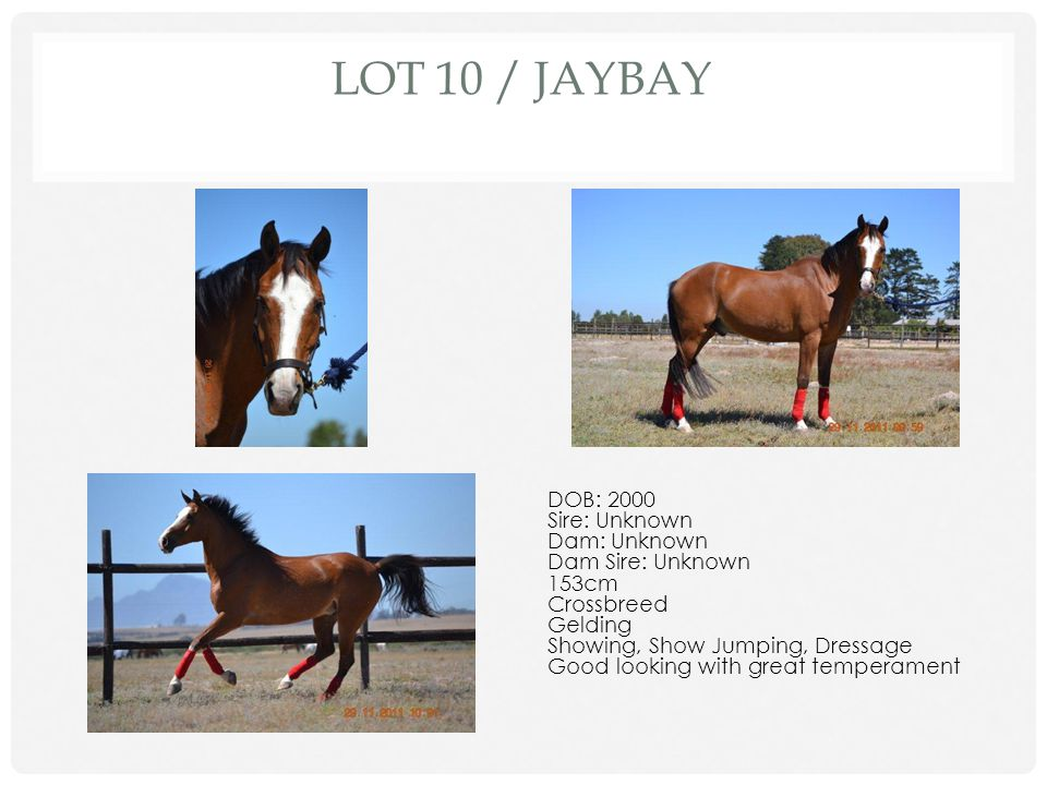 Lot 10 / Jaybay DOB: 2000 Sire: Unknown Dam: Unknown Dam Sire: Unknown