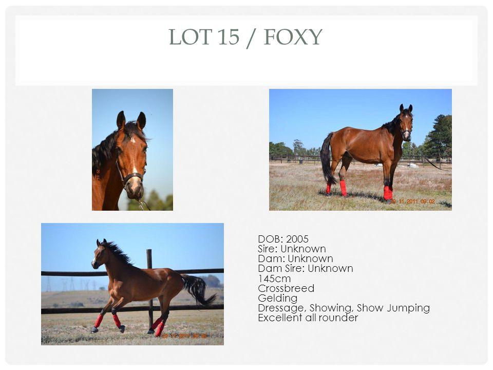 Lot 15 / Foxy DOB: 2005 Sire: Unknown Dam: Unknown Dam Sire: Unknown