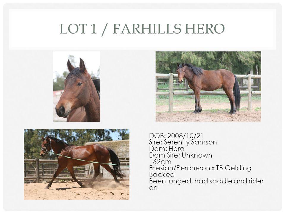 Lot 1 / Farhills Hero DOB: 2008/10/21 Sire: Serenity Samson Dam: Hera