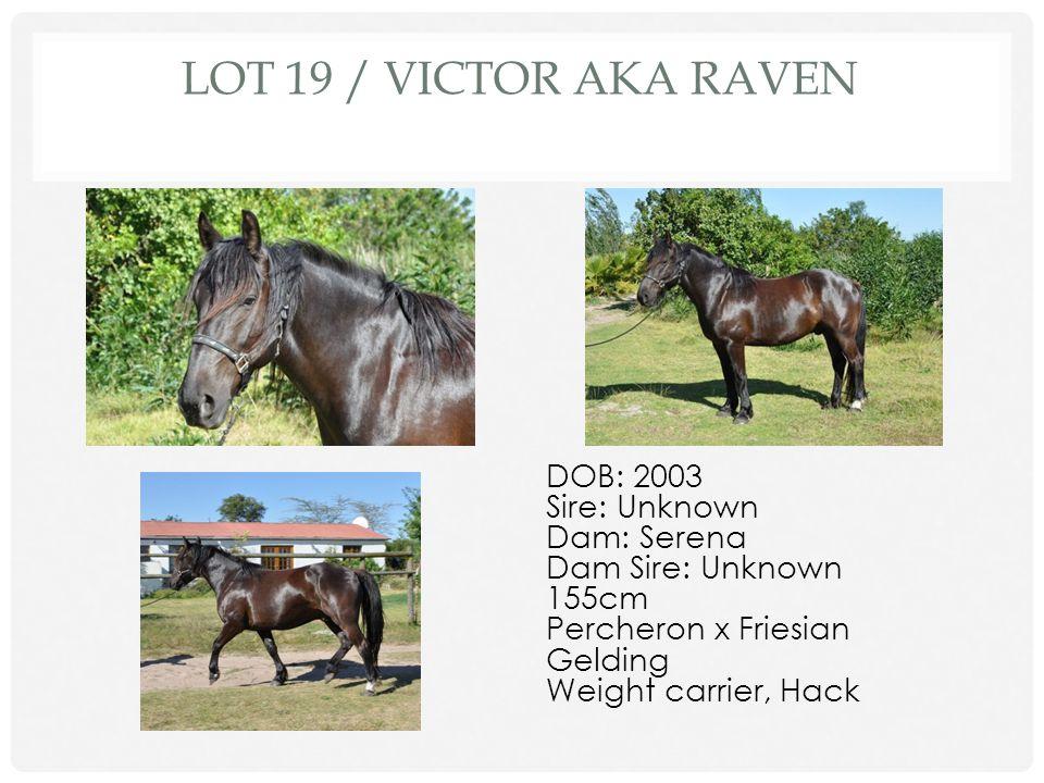 Lot 19 / Victor AKA Raven DOB: 2003 Sire: Unknown Dam: Serena