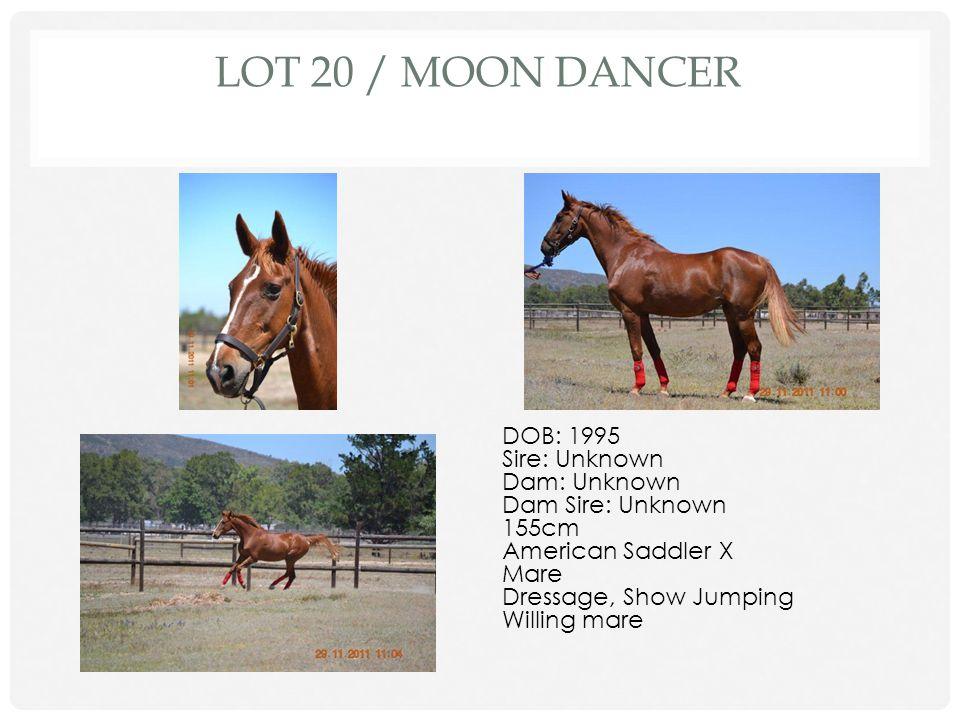 Lot 20 / Moon Dancer DOB: 1995 Sire: Unknown Dam: Unknown