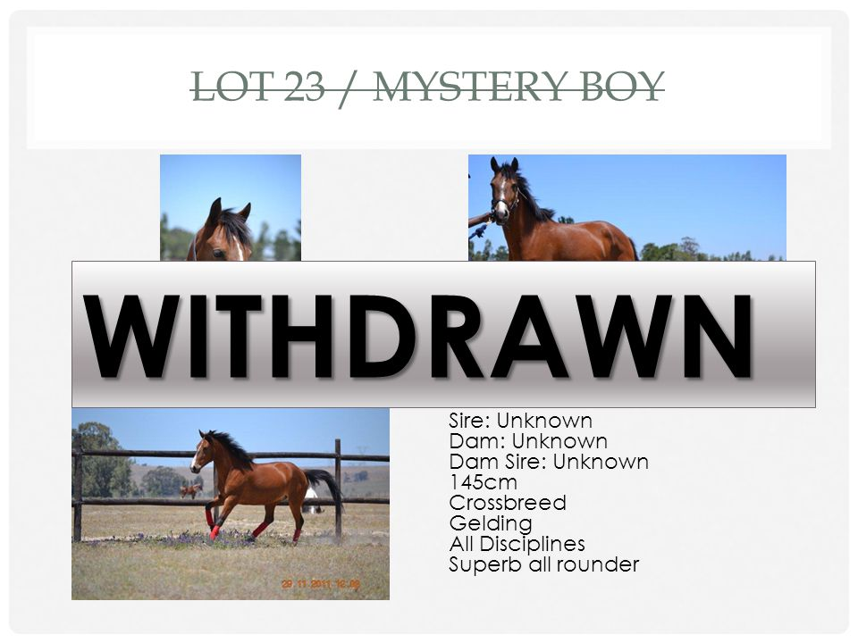 WITHDRAWN Lot 23 / Mystery Boy DOB: 2006 Sire: Unknown Dam: Unknown