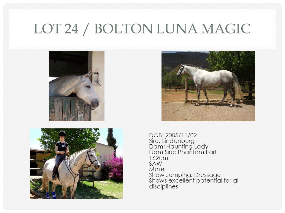 Lot 24 / Bolton Luna Magic DOB: 2005/11/02 Sire: Lindenburg