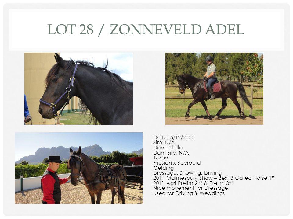 Lot 28 / ZONNEVELD ADEL DOB: 05/12/2000 Sire: N/A Dam: Stella