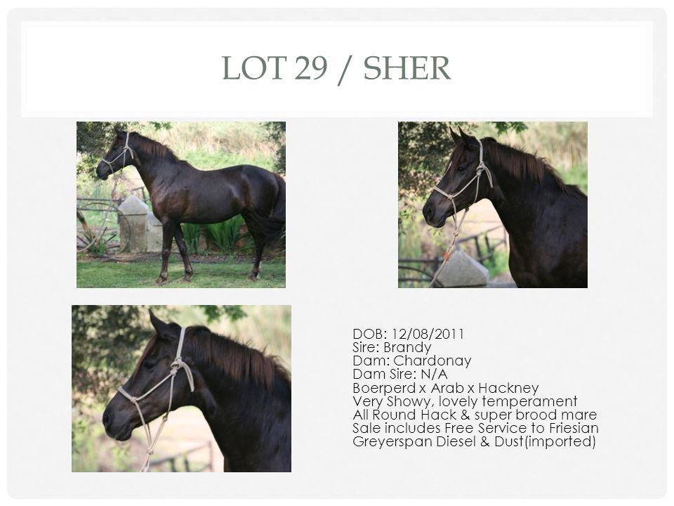 Lot 29 / Sher DOB: 12/08/2011 Sire: Brandy Dam: Chardonay