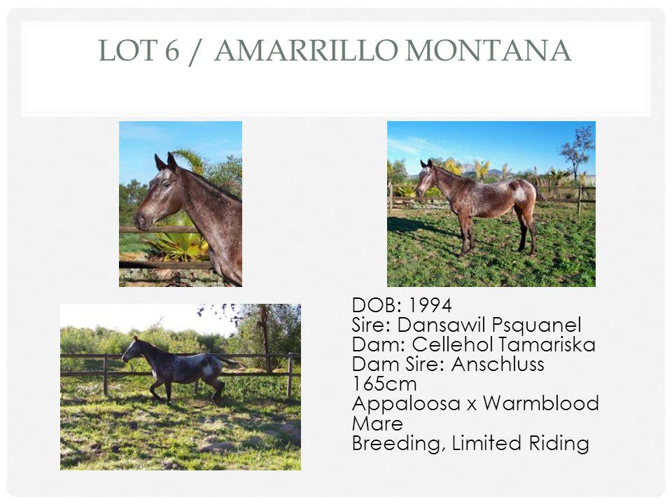 Lot 6 / Amarrillo Montana