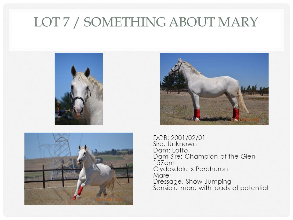 Lot 7 / Something About Mary