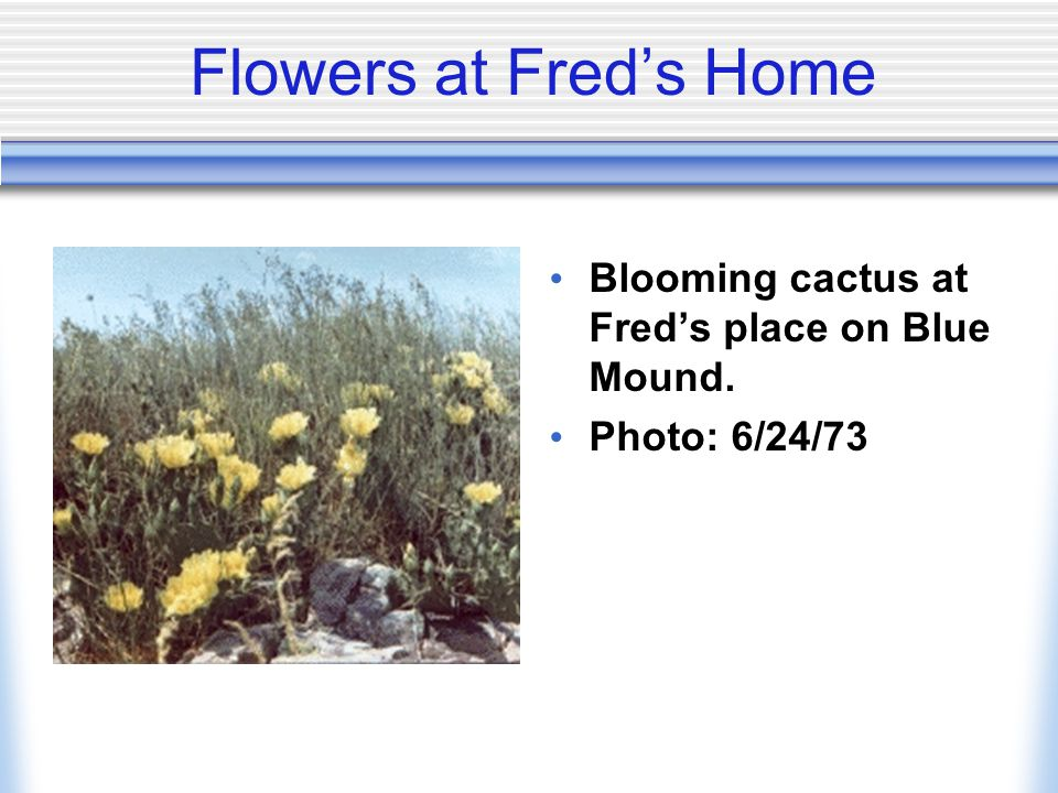 Flowers at Fred's Home Blooming cactus at Fred's place on Blue Mound.