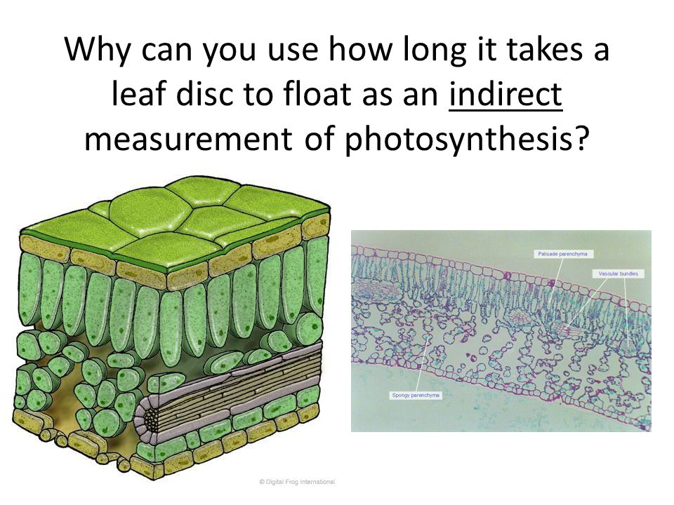 Why can you use how long it takes a leaf disc to float as an indirect measurement of photosynthesis