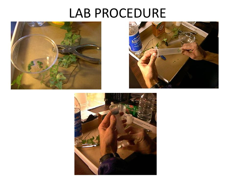 LAB PROCEDURE
