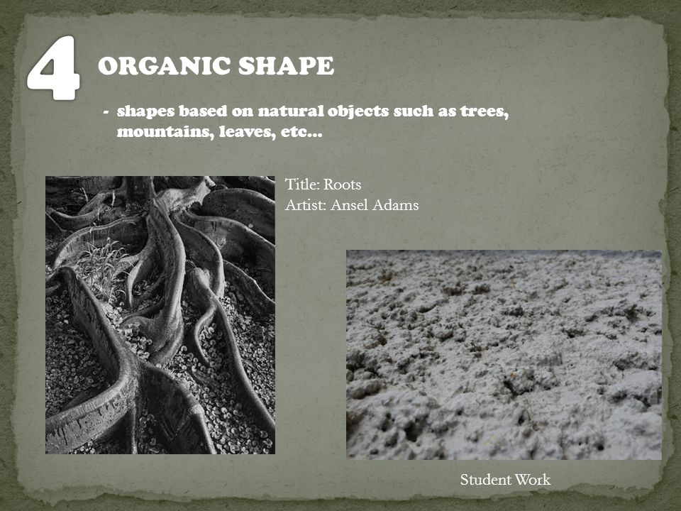 4 ORGANIC SHAPE. - shapes based on natural objects such as trees, mountains, leaves, etc… Title: Roots.
