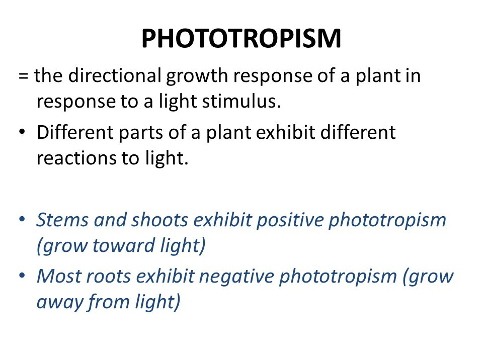 PHOTOTROPISM = the directional growth response of a plant in response to a light stimulus.
