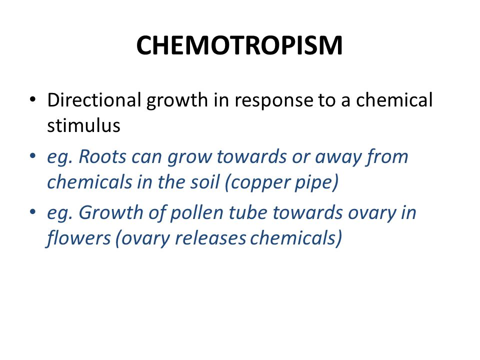 CHEMOTROPISM Directional growth in response to a chemical stimulus