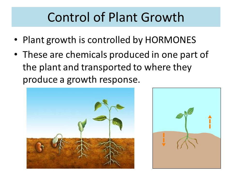 Control of Plant Growth
