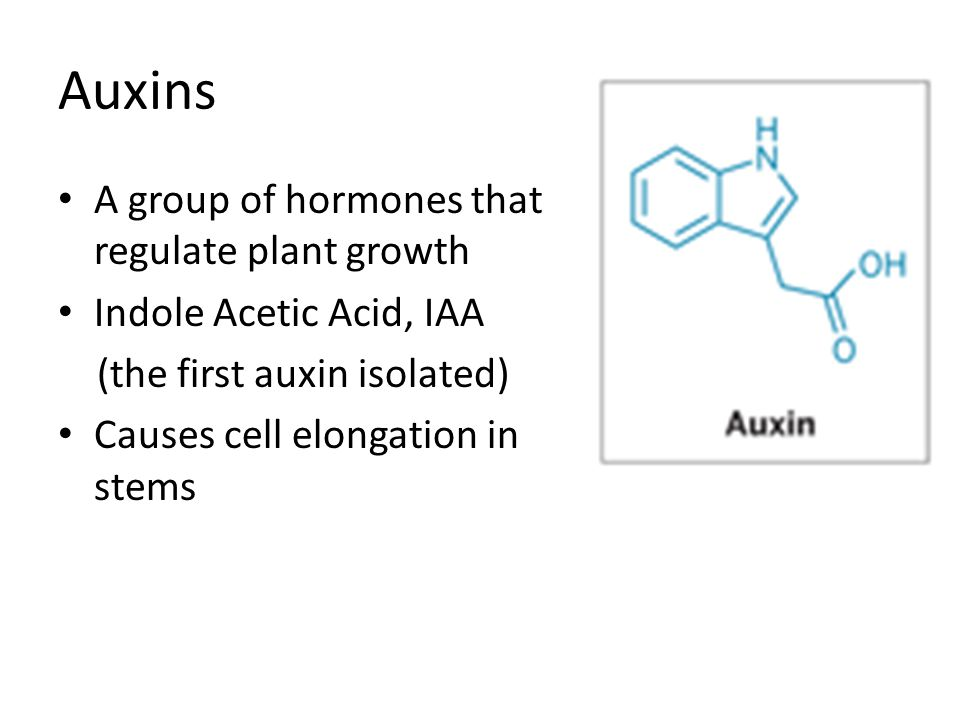 Auxins A group of hormones that regulate plant growth