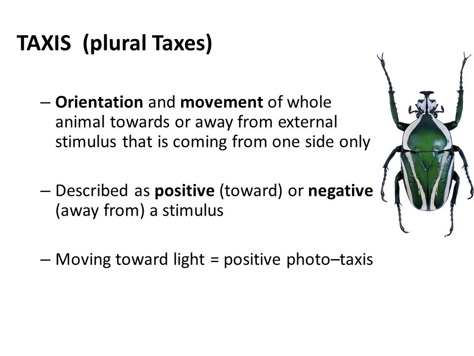 TAXIS (plural Taxes) Orientation and movement of whole animal towards or away from external stimulus that is coming from one side only.