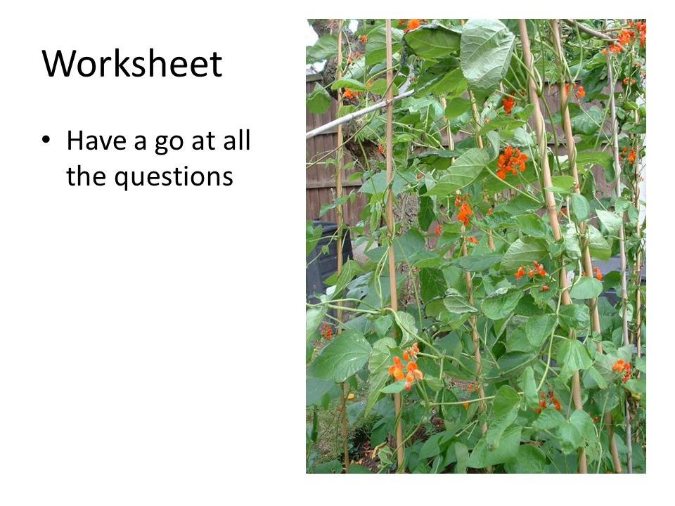 Worksheet Have a go at all the questions