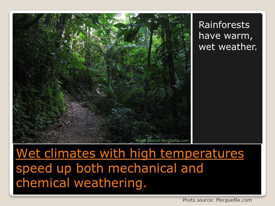 Rainforests have warm, wet weather.