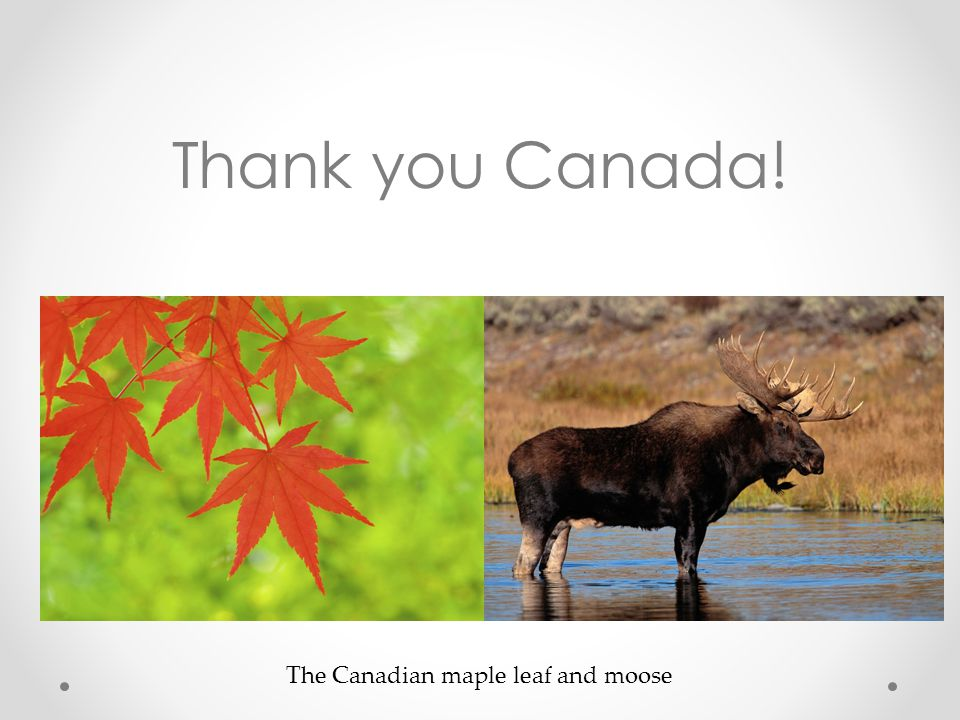 Thank you Canada! The Canadian maple leaf and moose