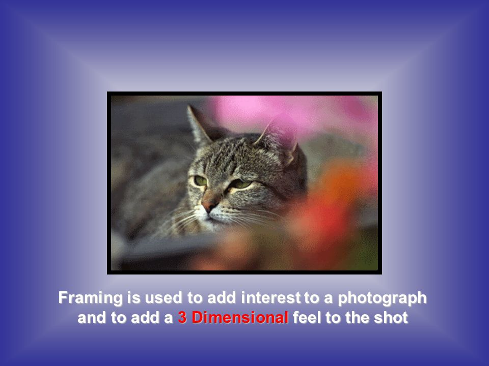 Framing is used to add interest to a photograph and to add a 3 Dimensional feel to the shot