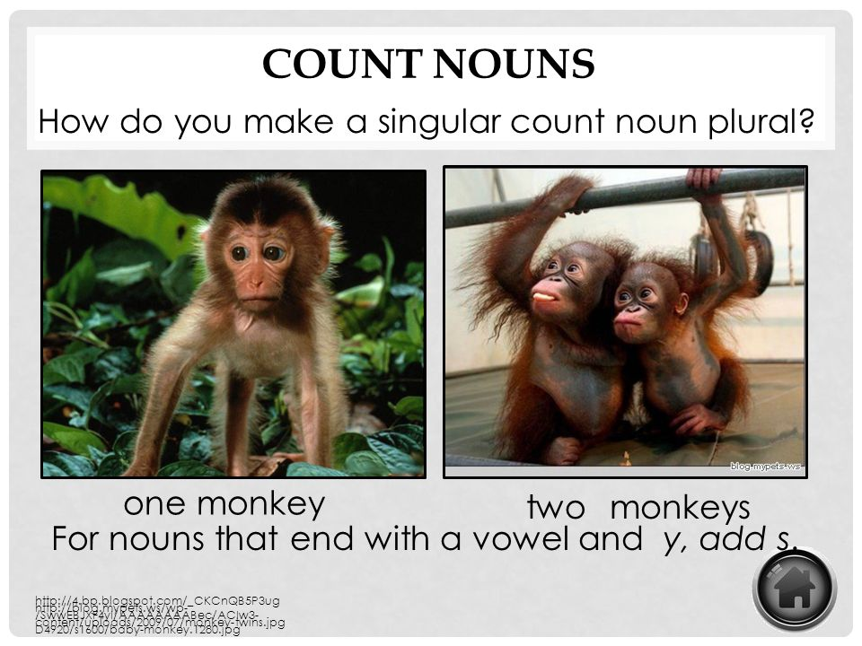 Count Nouns How do you make a singular count noun plural one monkey
